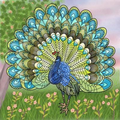 A beautiful peacock | Venkatesh | Digital Drawing | PENUP