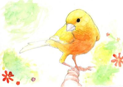 Yellow Canari | DanisionDevavu | Digital Drawing | PENUP