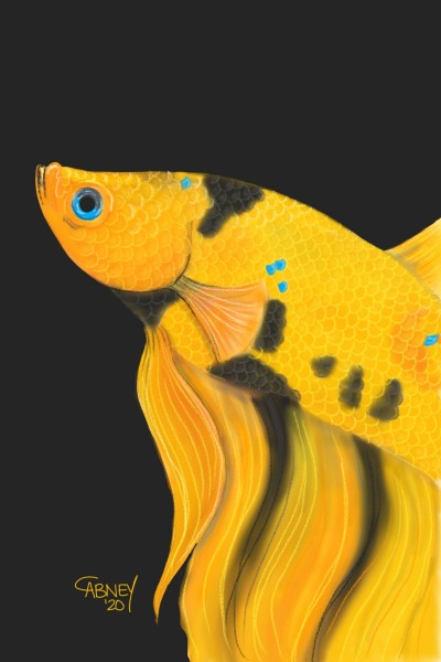 Yellow Koi Betta | shadowmare72 | Digital Drawing | PENUP