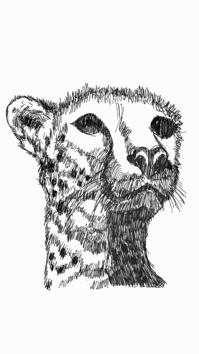 cheetah | panduaa | Digital Drawing | PENUP