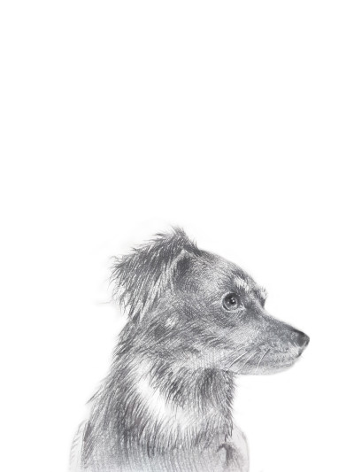 Dog   KWON   Digital Drawing   PENUP