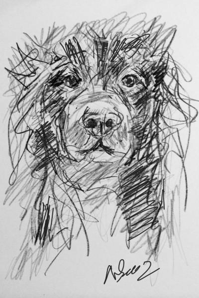 Animal Digital Drawing | nhiem | PENUP