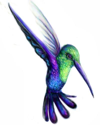 Hummingbird | heihei | Digital Drawing | PENUP