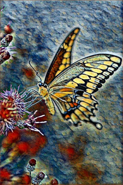 Butterfly | Sere | Digital Drawing | PENUP