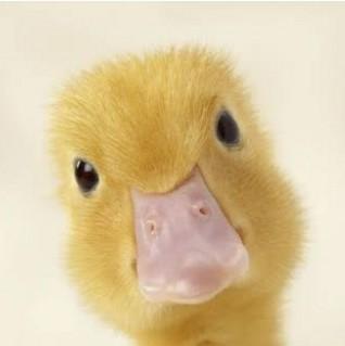 bob the duck  | life_is_art | Digital Drawing | PENUP