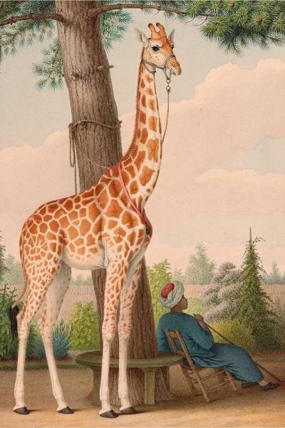 giraffe  | ROMA-2008 | Digital Drawing | PENUP