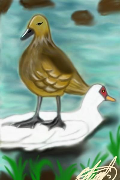 Cuackcuack!!   wera80   Digital Drawing   PENUP