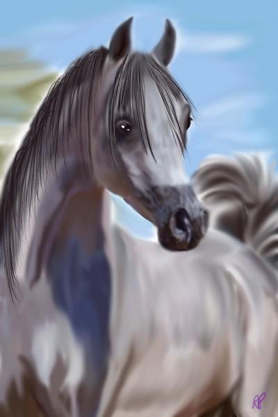 Arabian horse   Rebecca   Digital Drawing   PENUP