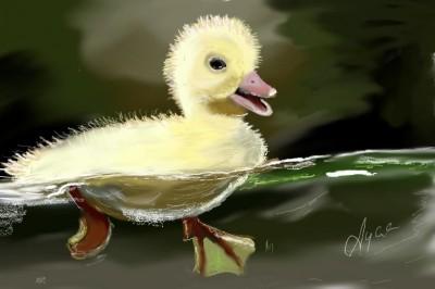 Little duckling | Ayca | Digital Drawing | PENUP