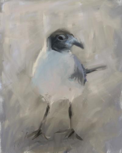 seagull   zak   Digital Drawing   PENUP