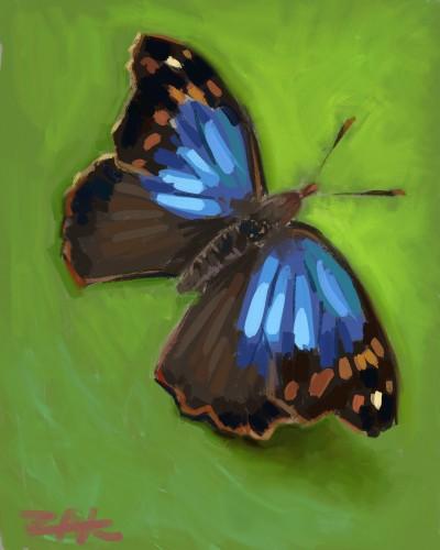 buterfly   zak   Digital Drawing   PENUP