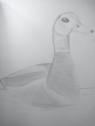 The Duck   Prince   Digital Drawing   PENUP