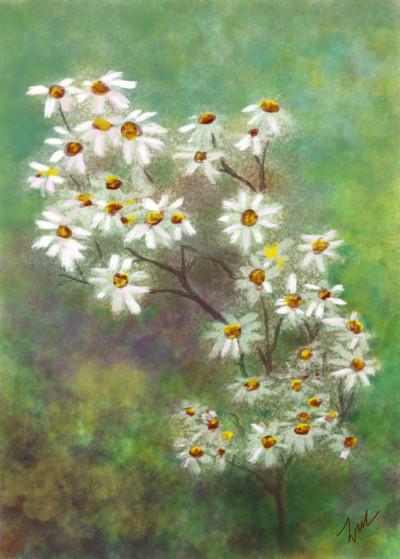 Wild Flower 7 | cavaca | Digital Drawing | PENUP