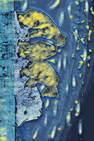 orsi sul fiume  | diamantecos | Digital Drawing | PENUP