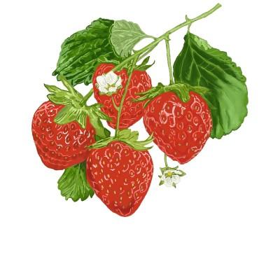Botanical strawberry drawing | allyx76 | Digital Drawing | PENUP