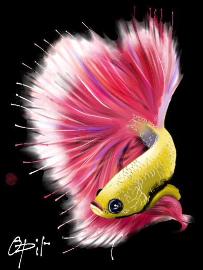 A colourful Betta fish | opit | Digital Drawing | PENUP