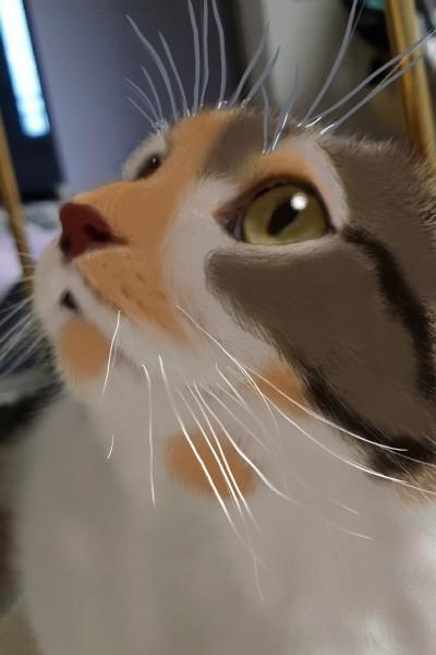 서은님의 고양이 쿠키(포토 드로잉으로 했어요) | cutyanimalser | Digital Drawing | PENUP