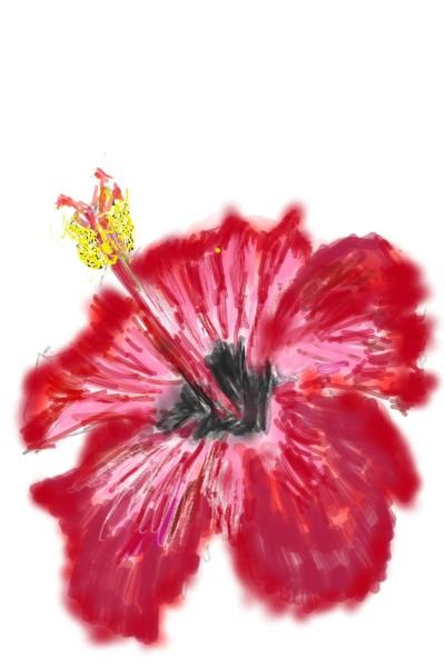 hibiscus   mengls   Digital Drawing   PENUP