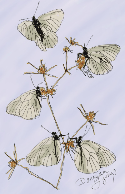 White Butterflies | missdarrian | Digital Drawing | PENUP
