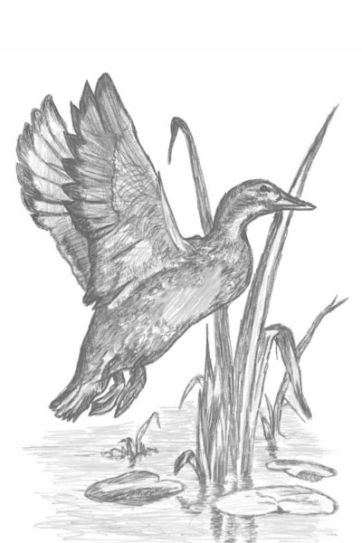 Elisa The Duck  | GivenChauke | Digital Drawing | PENUP