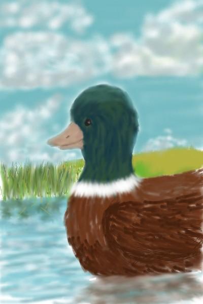ducky 2.0   belie   Digital Drawing   PENUP
