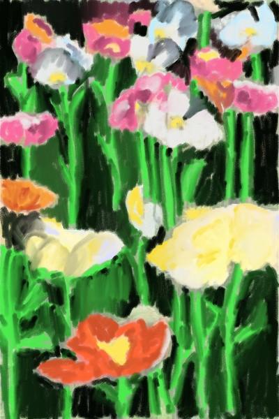 poppies | SarelArt | Digital Drawing | PENUP