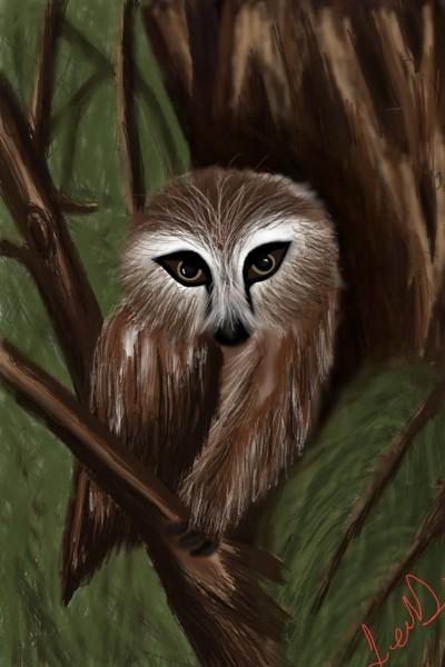 Brown Owl | JennD | Digital Drawing | PENUP