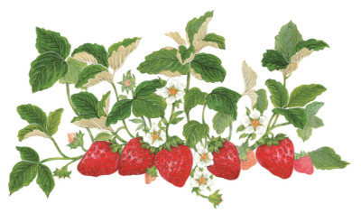 Strawberry  | sally1212__me | Digital Drawing | PENUP