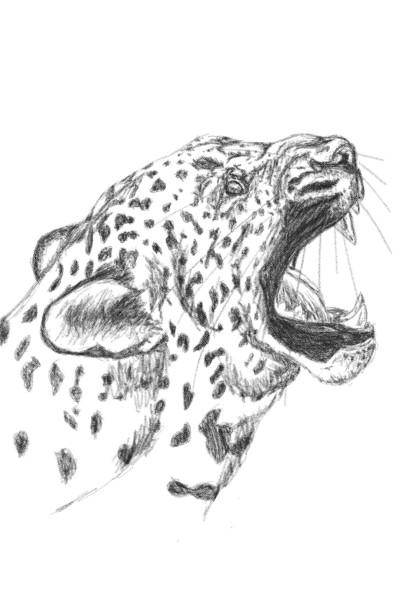 Leopard | lmoliver207 | Digital Drawing | PENUP