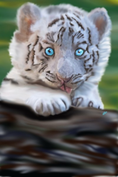 White tiger cub | Rebecca | Digital Drawing | PENUP