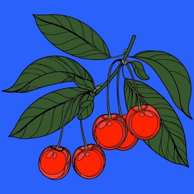 Cherries!    cptpebkac   Digital Drawing   PENUP