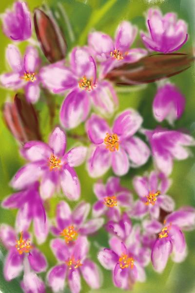 Plant Digital Drawing | Barbra | PENUP