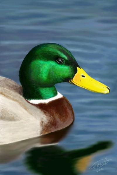 Duck | Kjo79 | Digital Drawing | PENUP