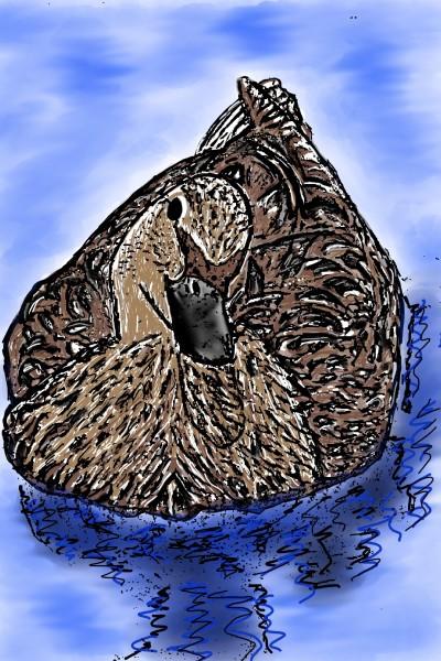 San Francisco Bay Duck   Bekkie   Digital Drawing   PENUP
