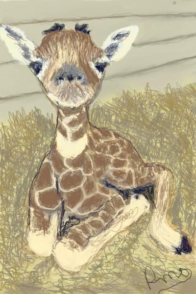 Animal Digital Drawing | Rhonda | PENUP