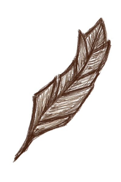 Brown Feather   C.Jones   Digital Drawing   PENUP