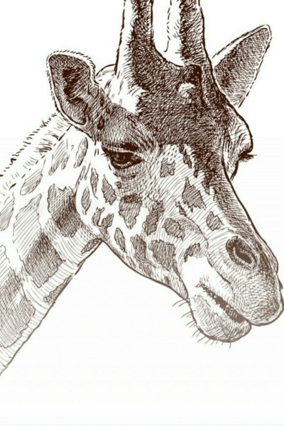 Giraffe | MiniDrawer | Digital Drawing | PENUP
