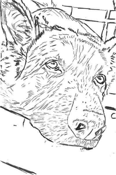 Animal Digital Drawing | preritabhardwaj | PENUP