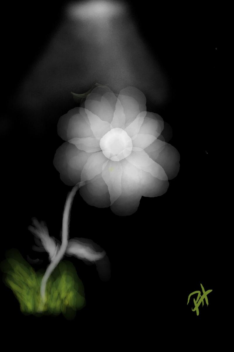 Flower Light | PhillipHanson | Digital Drawing | PENUP