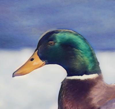 duck | Severite | Digital Drawing | PENUP