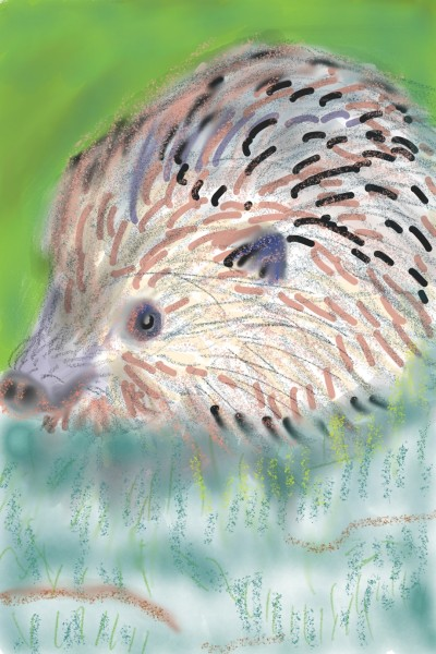 Igel | Rhyneptun | Digital Drawing | PENUP