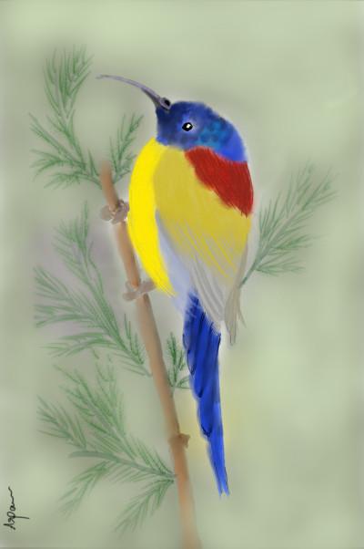 colorful bird♡ | arpu | Digital Drawing | PENUP