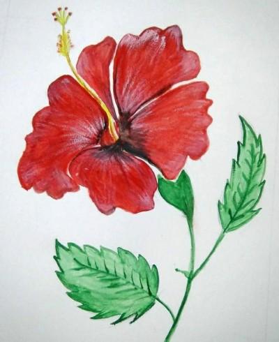 Hibiscus Flower | Asa | Digital Drawing | PENUP