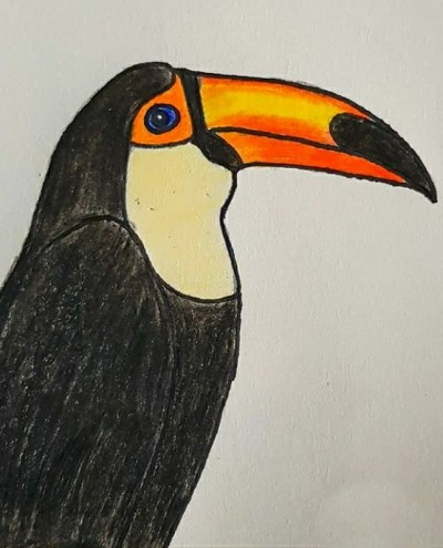 Toucan | Asa | Digital Drawing | PENUP
