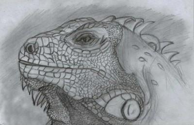 Iguana  | Asa | Digital Drawing | PENUP