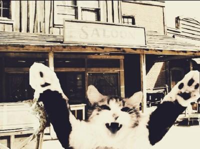cat | Alex_Raven | Digital Drawing | PENUP