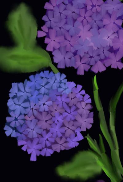 purple flowers   raya   Digital Drawing   PENUP