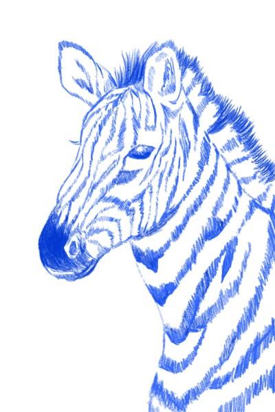 zebra | oroll | Digital Drawing | PENUP