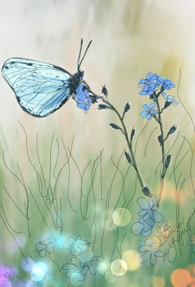 Field Butterfly | missdarrian | Digital Drawing | PENUP