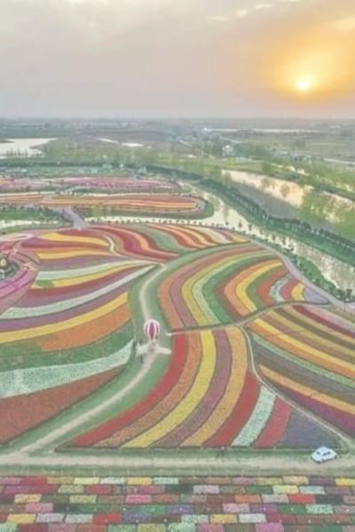 شمسٌ ساطعة فوق أرض مكسوة بنباتات ملونة | HAshem2000 | Digital Drawing | PENUP
